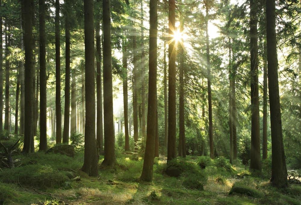 ИКЕА запускает программу по сохранению лесов