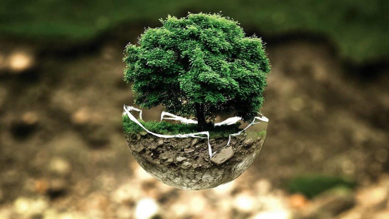 ИКЕА призывает к экологическому восстановлению Европы