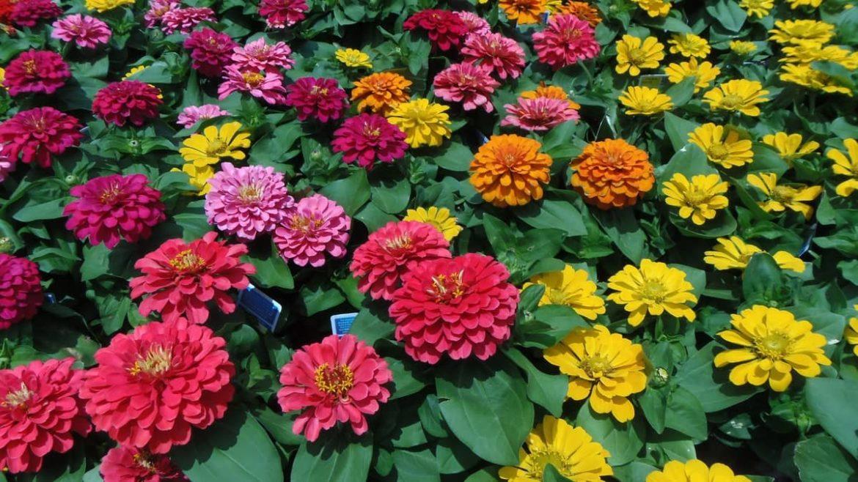 Инструкция по выращиванию цветов