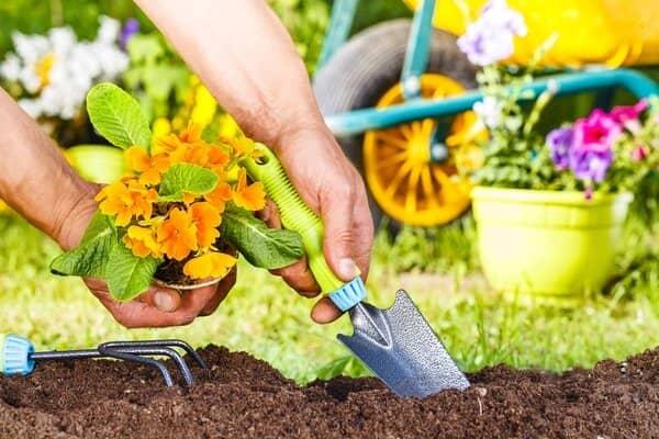 Крайне важно тщательно перекопать почву перед посадкой